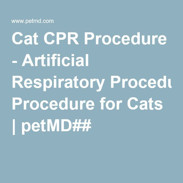 Cat CPR Procedure - Artificial Respiratory Procedure for Cats | petMD##