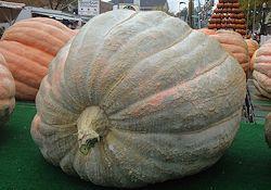 October (21st-24th): Circleville Pumpkin Show