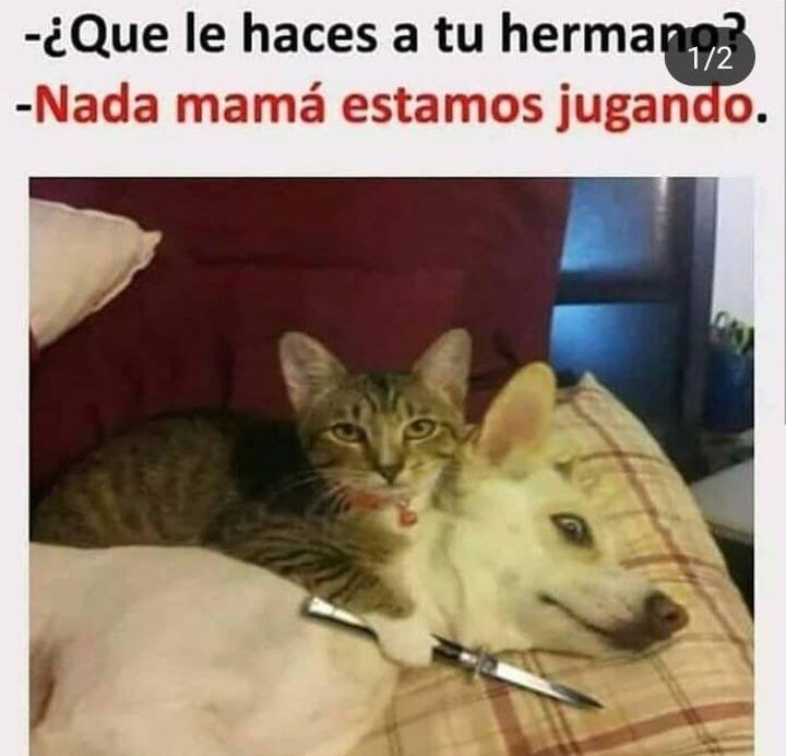 Pin De Yajairacast En Memes Memes Chistes Graciosos De Animales Memes Graciosos De Animales