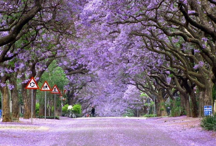 Pretoria, Afrique du Sud