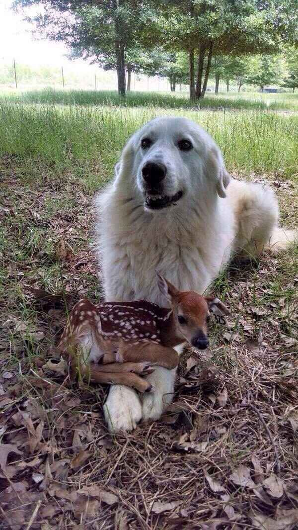 This fluff who is a little confused about his new friend, but going with it.