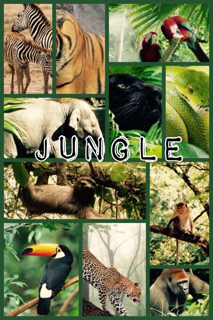 Jungle edit