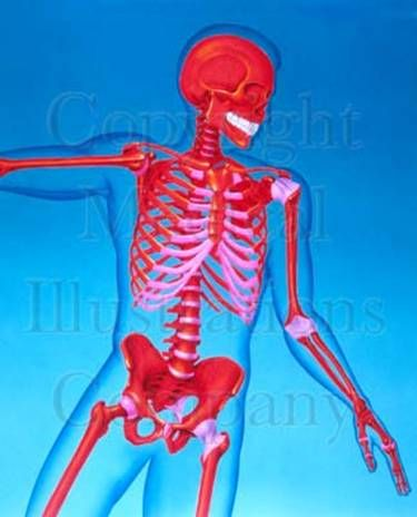 12 best Anatomy Pins images on Pinterest   Anatomy reference ...