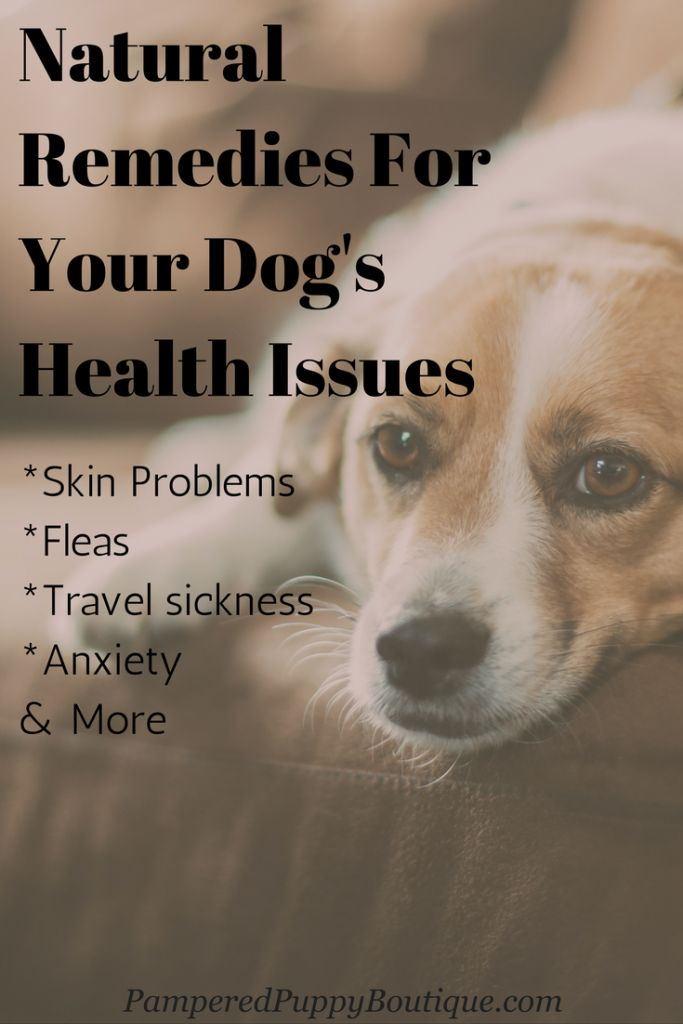 Natural remedies for your dog. The one for skin allergies you probably never thought of.