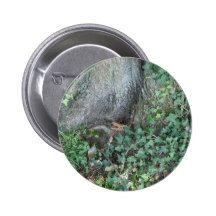Tree trunk and ivy in forest pinback button