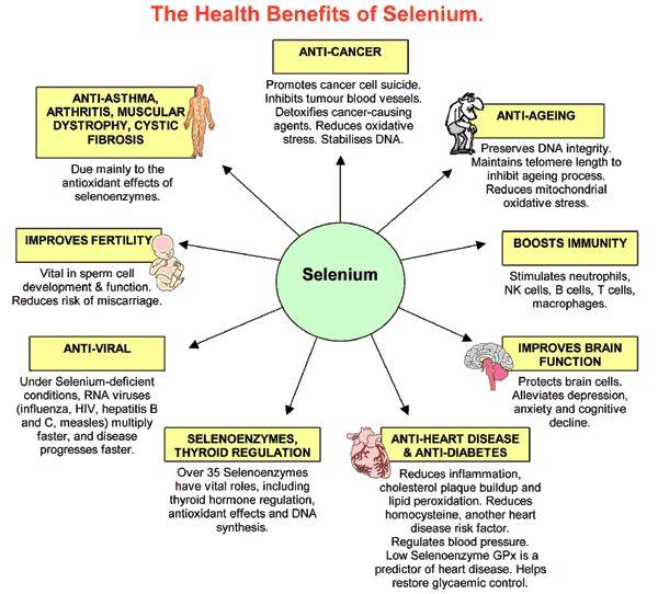 SELENIUM - Function, Health Benefits