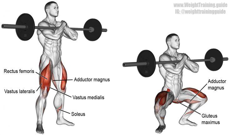 Zercher squat exercise