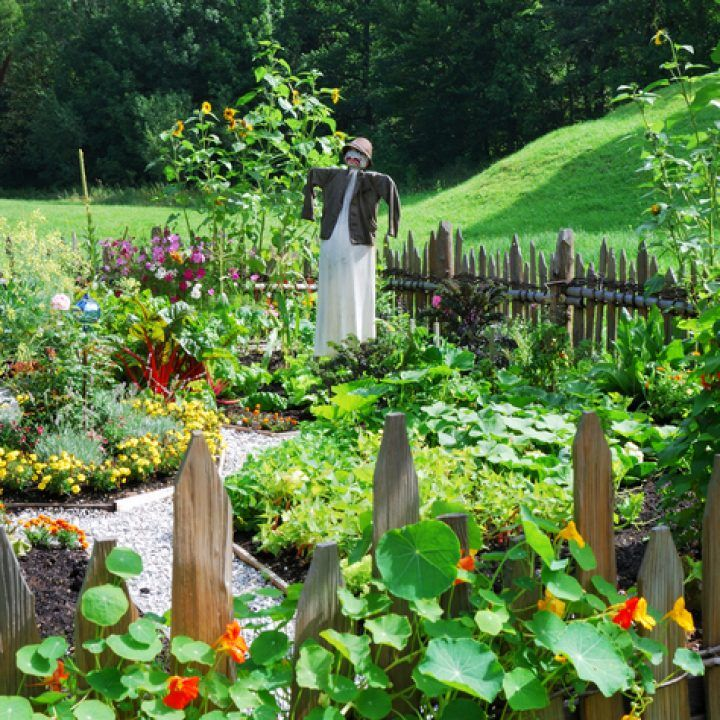 die besten 25 gladiolen blume ideen auf pinterest gladiolen sch ner blumengarten und. Black Bedroom Furniture Sets. Home Design Ideas