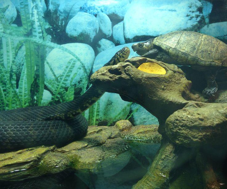 Reseal A Glass Tank Aquarium