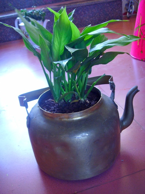 Cool house plant