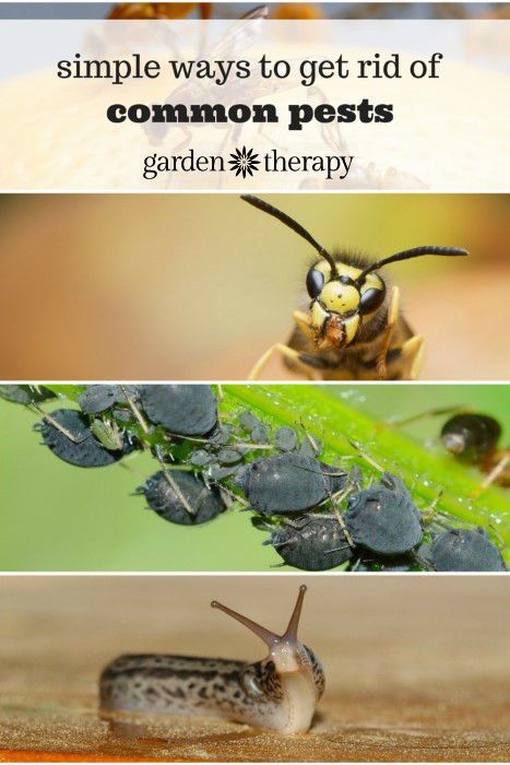 Simple ways to get rid of common garden pests