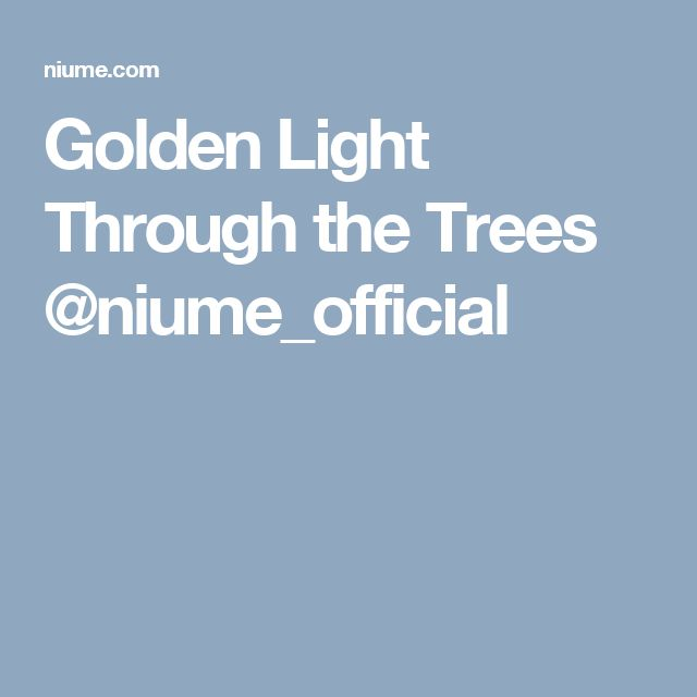Golden Light Through the Trees @niume_official