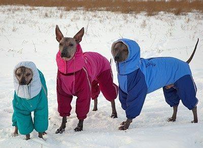 Мексиканский костюм для собак