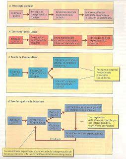 BASES BIOLOGICAS DEL COMPORTAMIENTO: SISTEMA LIMBICO