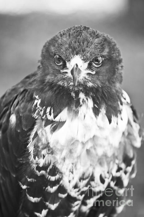 'Looking At You' by Paulo Perestrelo © 2012 - Fine Art & Wildlife Photography