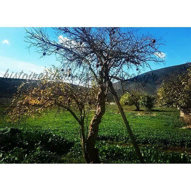 "Histoires De Roses: Ο Κήπος της γιαγιας ""Χειμώνας"" Greece, argolida, ermionida, winter"