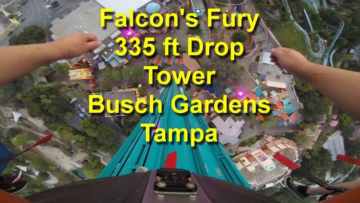 Falcon's Fury 335ft Drop Tower OnRide POV at Sunset Busch Gardens Tampa
