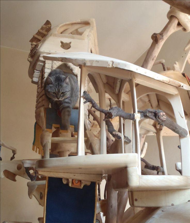 DomusfeliS - special playzones for cats - Unique pieces for unique cats, sculptures for cats, untreated precius wood: plum, apricot, seasoned poplar, birch, bamboo, oak and piracanta. #catcastle #cattower #catcondo #cattree #luxurypethome #petdesig #catgift #cataccessories