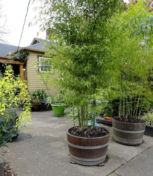 best 25 privacy landscaping ideas on pinterest. Black Bedroom Furniture Sets. Home Design Ideas