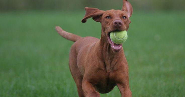 Óleos essenciais que podem ser úteis no tratamento de ácaros nas orelhas de cães. Ácaros da orelha, que são parasitas da orelha, podem infectar cães. Estes parasitas causam extrema coceira nos ouvidos. O interior da orelha do seu cão pode tornar-se vermelha, inflamada e com cera excessiva. Cães com uma infecção na orelha provavelmente irão balançar a cabeça e coçar os ouvidos constantemente. Se não tratada, pode ocorrer uma ...