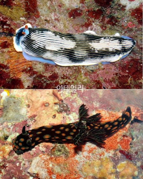 `新발견` 물고기야 달팽이야?