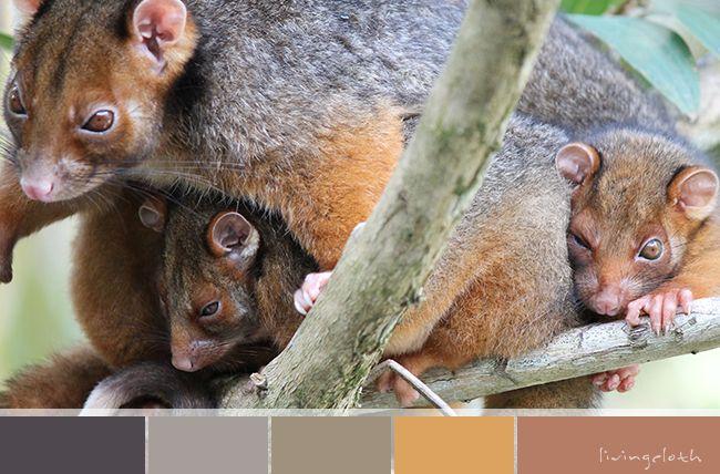 possum mum and babies - livingcloth.com