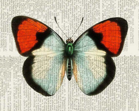 He mejorado la obra de arte hermosa mariposa vintage e imprimidos digitalmente la imagen directamente en la página del libro de la edad de oro. Listo, es obra de arte única, hermosa y asequible con encanto vintage.  Mejor en persona. Parece imposible capturar la pátina cálido tostado páginas de edad, y ver los encantadores detalles de las ilustraciones para la web.  TAMAÑO de una alfombra estándar de 8 x 10 con una abertura para una impresión 5 x 7. La única imagen con mat muestra cómo la…