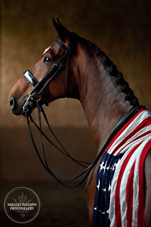Beautiful horse dressed in the American Flag