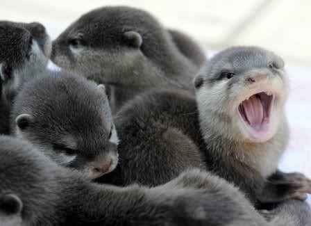 otter baby kaufen