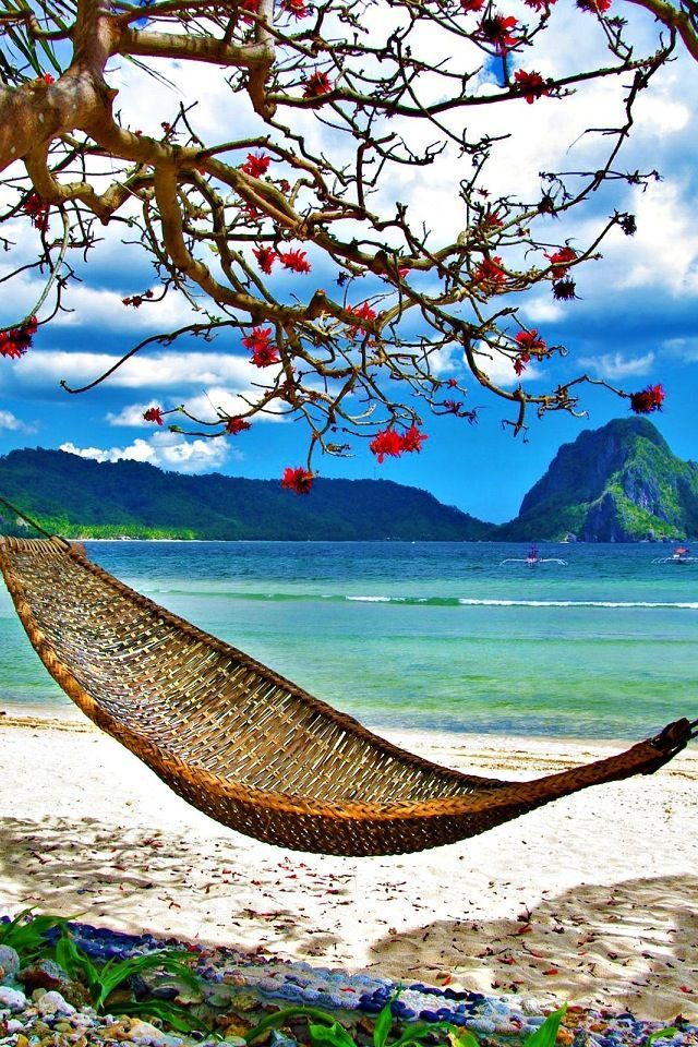 Just a hammock in a tropical paradise | Nature and Travel ...