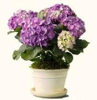 Why you should not shed flowers? Click on the picture ///  Dlaczego nie należy przelewać kwiatów? Kliknij w zdjęcie