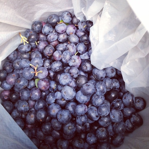 Freshly picked #blueberries from #thecountryroad in the Pohangina Valley. Picking season is January. #instagram