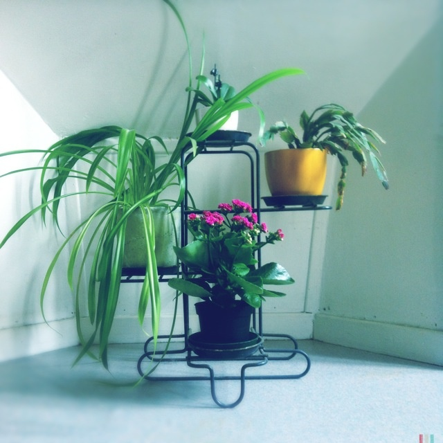 indoor plant display styled canvas blog pinterest