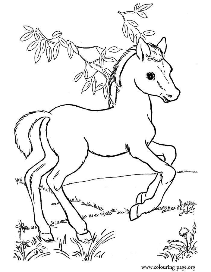 Baby Horse Coloring Page - Youngandtae.com Farm Animal Coloring Pages,  Animal Coloring Pages, Horse Coloring Pages