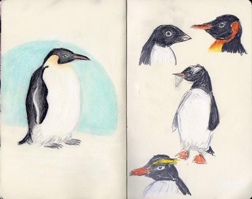 Why Do Penguins Wear Tuxedos? by Kaja Zalokar