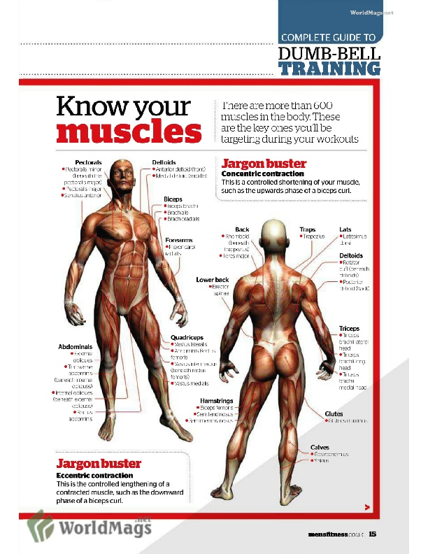 17 best images about anatomy on pinterest | head and neck, muscle, Cephalic Vein