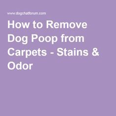 1000 Ideas About Remove Dog Odor On Pinterest Urine