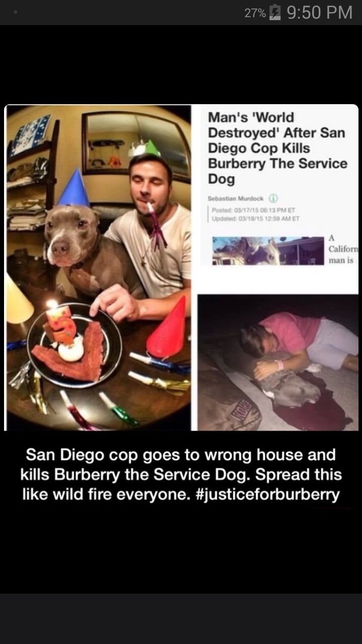 """""""California man is demanding police accountability after an officer fatally shot his service dog in the head.Ian Anderson of San Diego told The Huffington Post he was sleeping in his home when officers pounded on his door at 5 a.m. Sunday over a domestic disturbance call. The 24-year-old man said police had the wrong house.The knocking woke up Anderson and his 6-year-old pit bull, Burberry, who started barking until Anderson opened the door for the officers. In a surveillance video obtained…"""