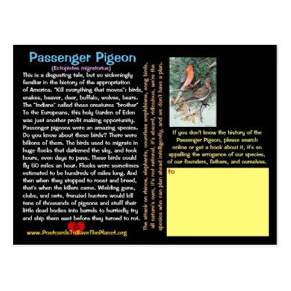 Sad Sad Tale of the Passenger Pigeon -- Postcard - postcard post card postcards unique diy cyo customize personalize