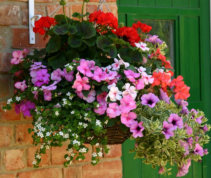 Hanging baskets containers and flower pouches brighten up any area of the garden whether in sun or shade Find out how to plant hanging baskets and
