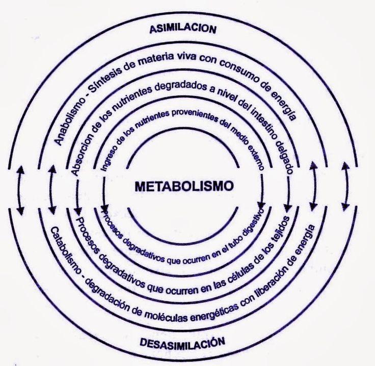 Su negocio será Metabolismo Si no lees este artículo