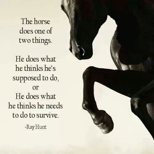 """The horse does one of two things…"""