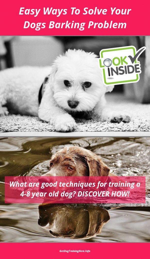 Pet Training Methods Dogtrainingvideo 1160467475