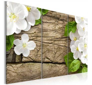 https://galeriaeuropa.eu/obrazy-inne-kwiaty/8002778-obraz-biale-kokietki