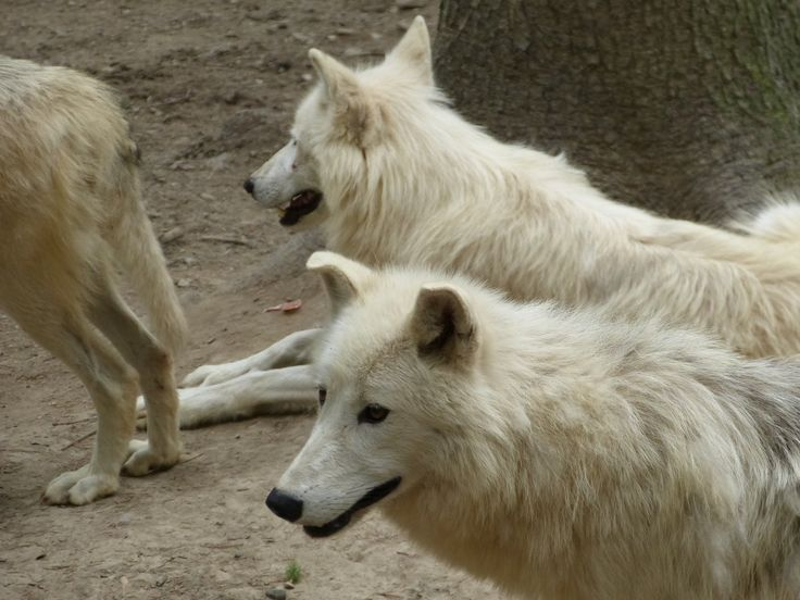 Olomouc Zoo - Czech Republic