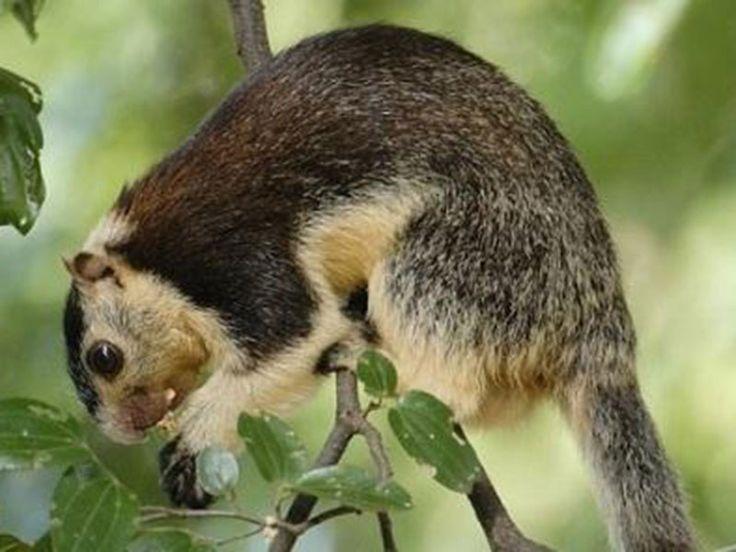 Fakim Wildlife Sanctuary in Nagaland, India.