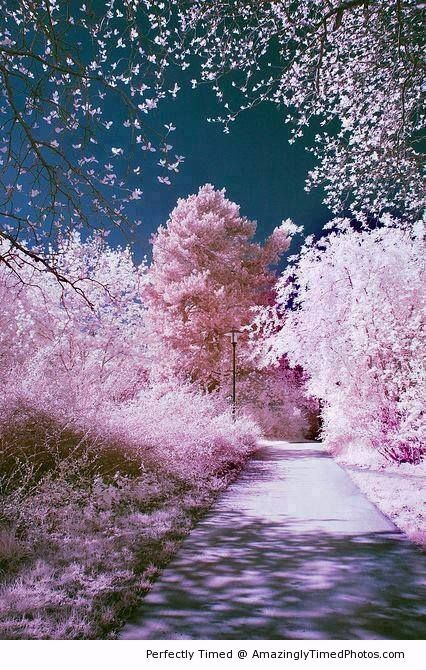 Cherry Blossom, Sakura, Japan – The sign that Spring is in the air. The annual trek to see cherry blossoms is getting closer.