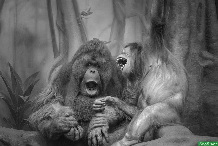 Сплетники зоопарка
