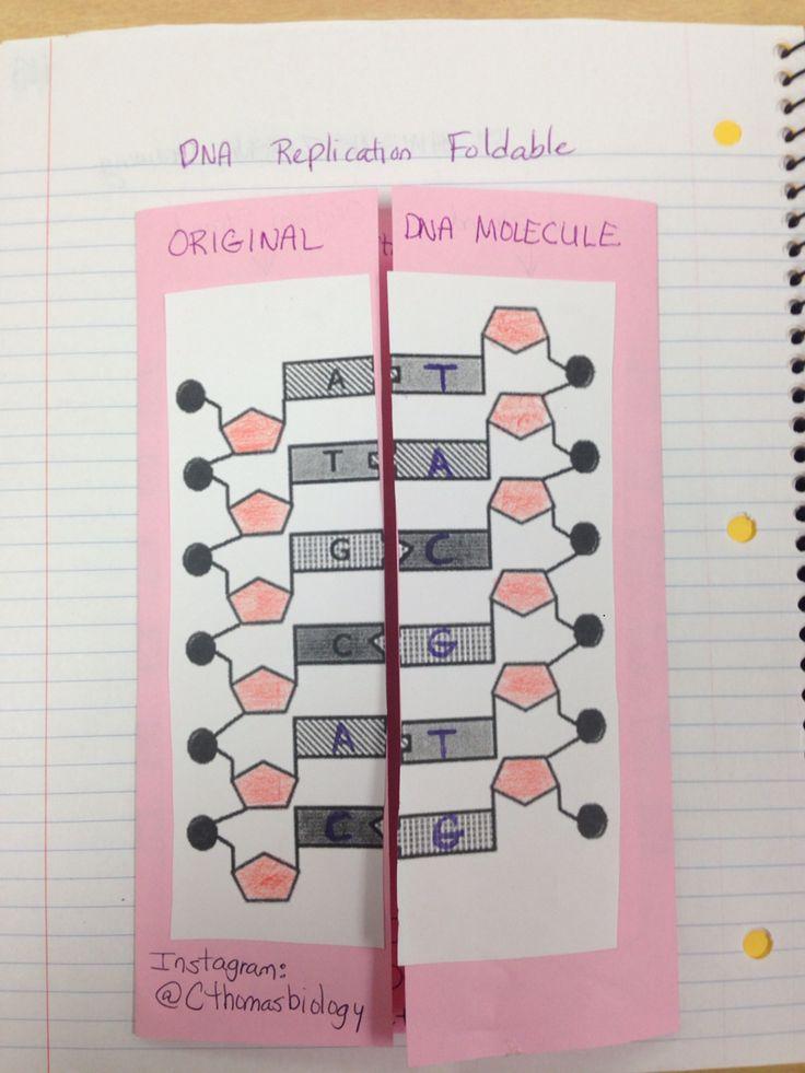 DNA Foldable outside