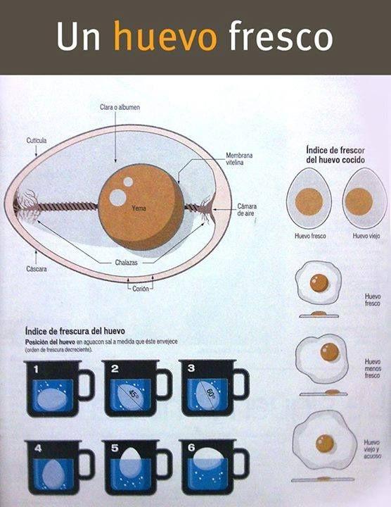 Cómo Saber Si Un Huevo Está Fresco Food Infographic Etiquette And Manners Lactose Intolerant Recipes
